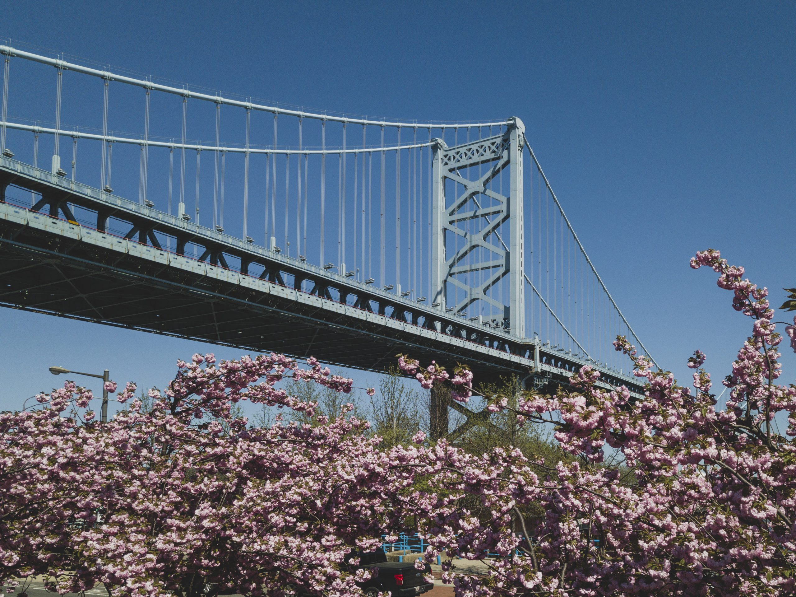 Real Estate With Heart showing the  Benjamin Franklin Bridge in Philadelphia, Pennsylvania (PA), USA. Cherry Blossoms are in the foreground on the riverfront of the Delaware River in Philadelphia where Real Estate with Heart provides real estate brokerage services for Compass Real Estate for home buyers and sellers.